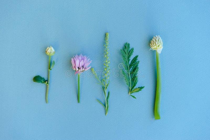 Set śródpolne dzikie rośliny, ziele, mieszkanie nieatutowy Botaniczny wzór na b zdjęcie royalty free