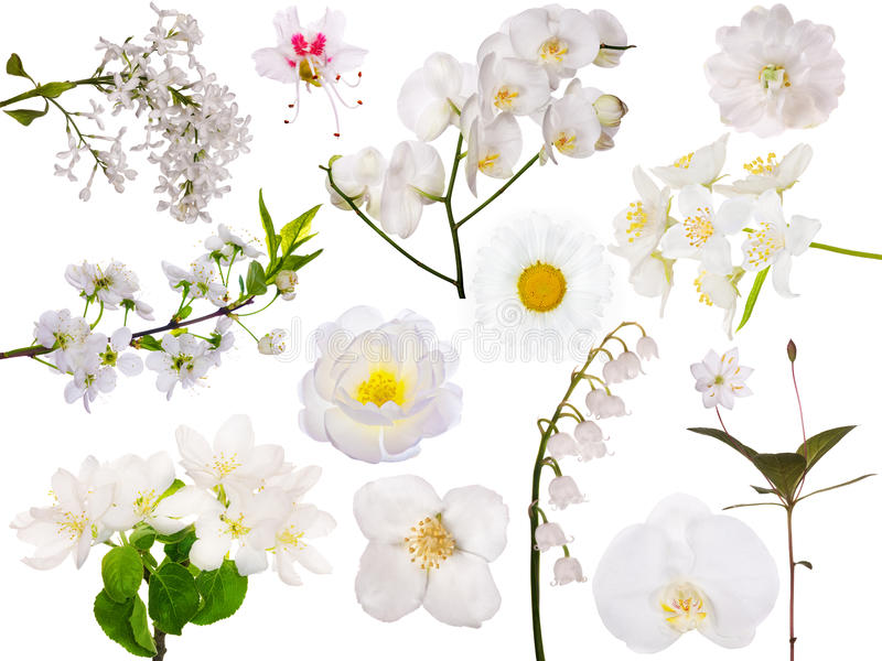 Set odosobneni biali kwiaty obrazy royalty free