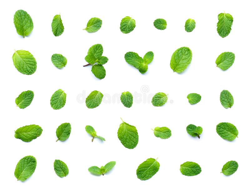 Set świeżej mennicy liścia odgórny widok odizolowywający na białym tle zdjęcie royalty free
