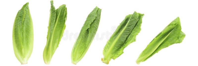 set świeży organicznie zielony Cos sałaty lub romaine sałaty isolat obrazy stock