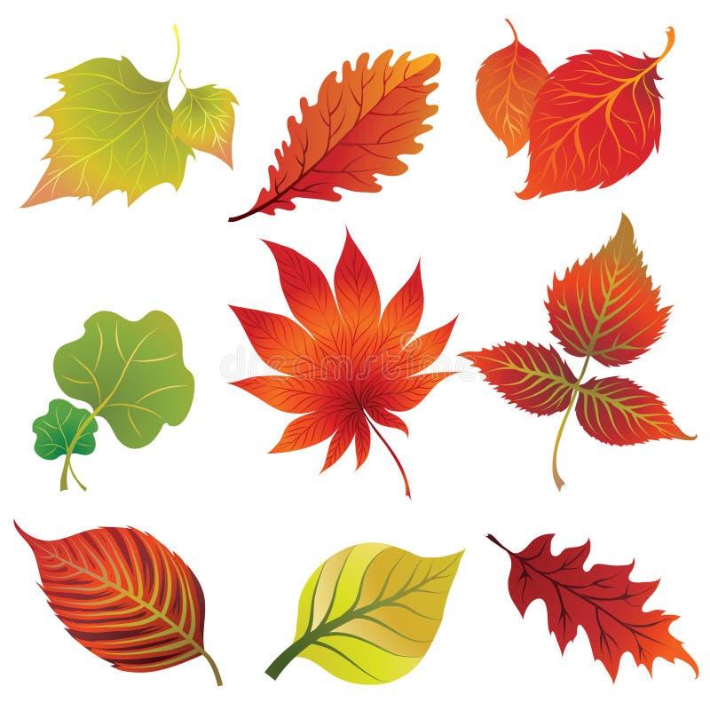 Set 2 of autumn leaves. Thanksgiving stock illustration