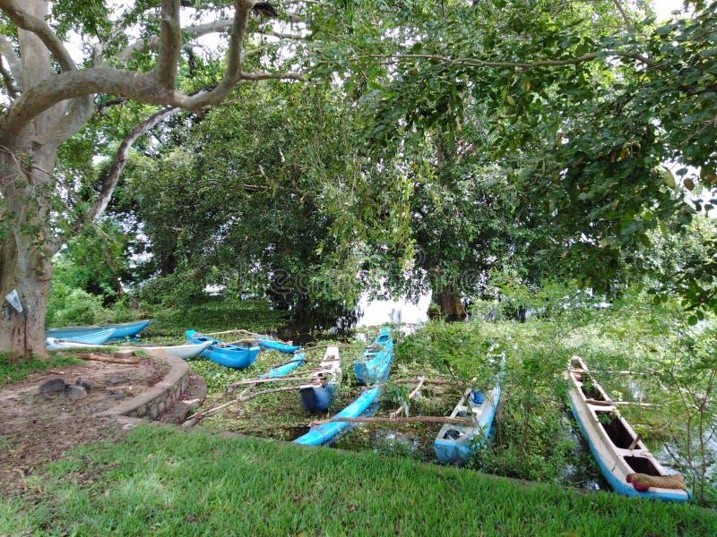 Set of abundant boats under a tree ,shallow area of the lake stock photos
