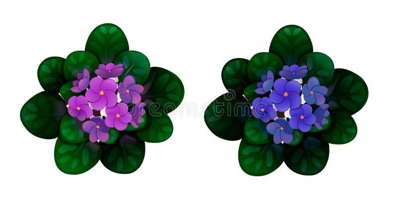Set of african violets, violet and blue royalty free illustration