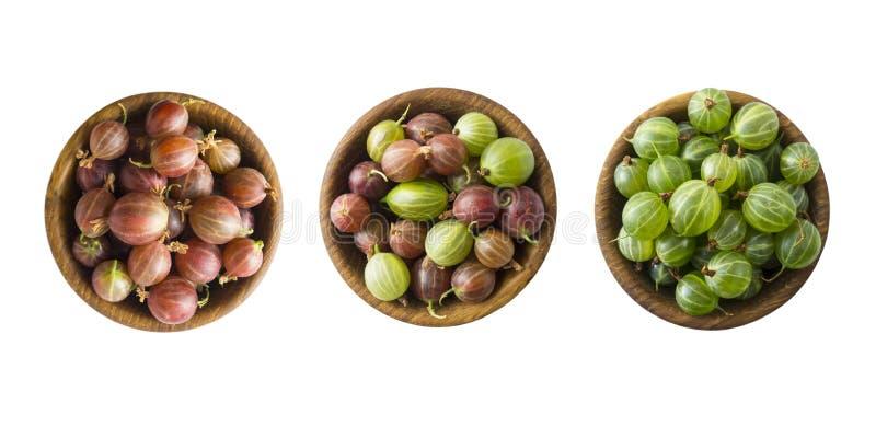 Set agrest Agrest owoc odizolowywać na białym tle Agresty w pucharze z kopii przestrzenią dla teksta zdjęcia stock