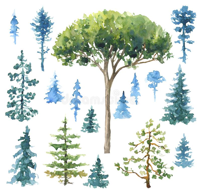 Set akwareli Conifers royalty ilustracja