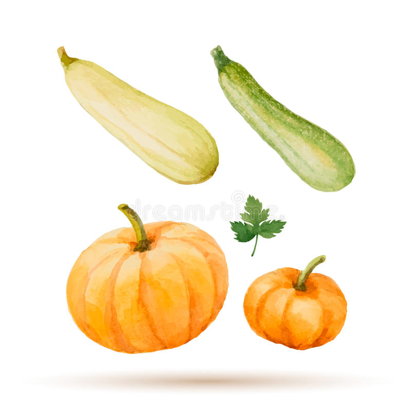 Set akwareli warzywa ilustracji