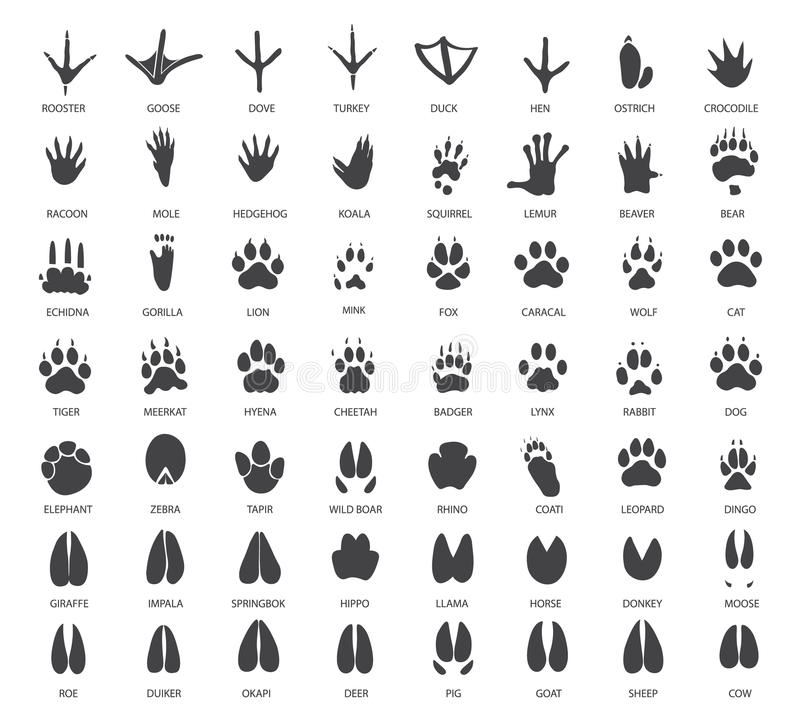 Set of animal tracks stock illustration