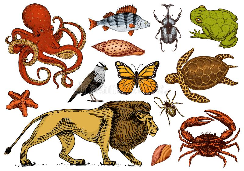 Set of animals. Reptile and amphibian, mammal and insect, wild turtle. Engraved hand drawn. Old vintage sketch. Beetle. Shell lion butterfly fish octopus spider stock illustration