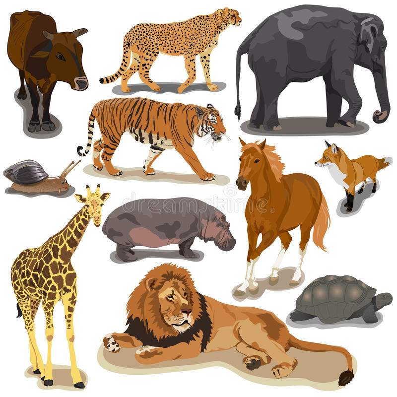 Set with Animals vector illustration
