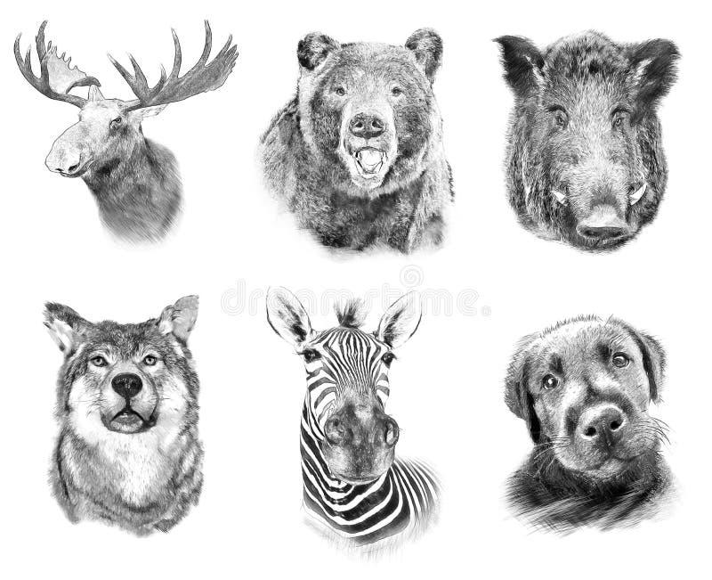 Set On Animals On White Background Illustration In Draw Stock Illustration Illustration Of Concept Background 85634637