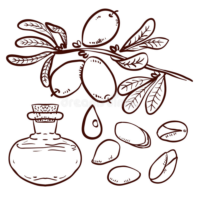Set of Argan Oil. Set of isolated branches, leaves, nuts, fruits, argan tree (ironwood). Suitable for packing Argan oil creams. Vector illustration of a hand vector illustration