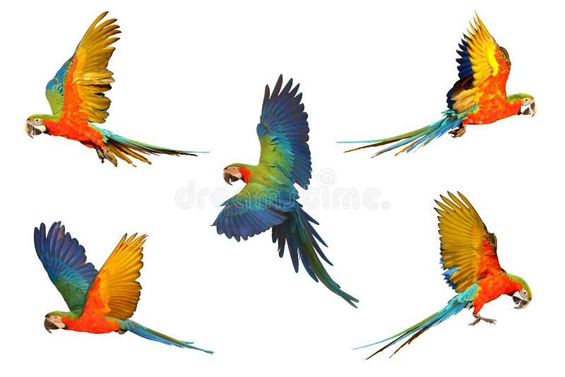 Set ary papuga zdjęcie royalty free