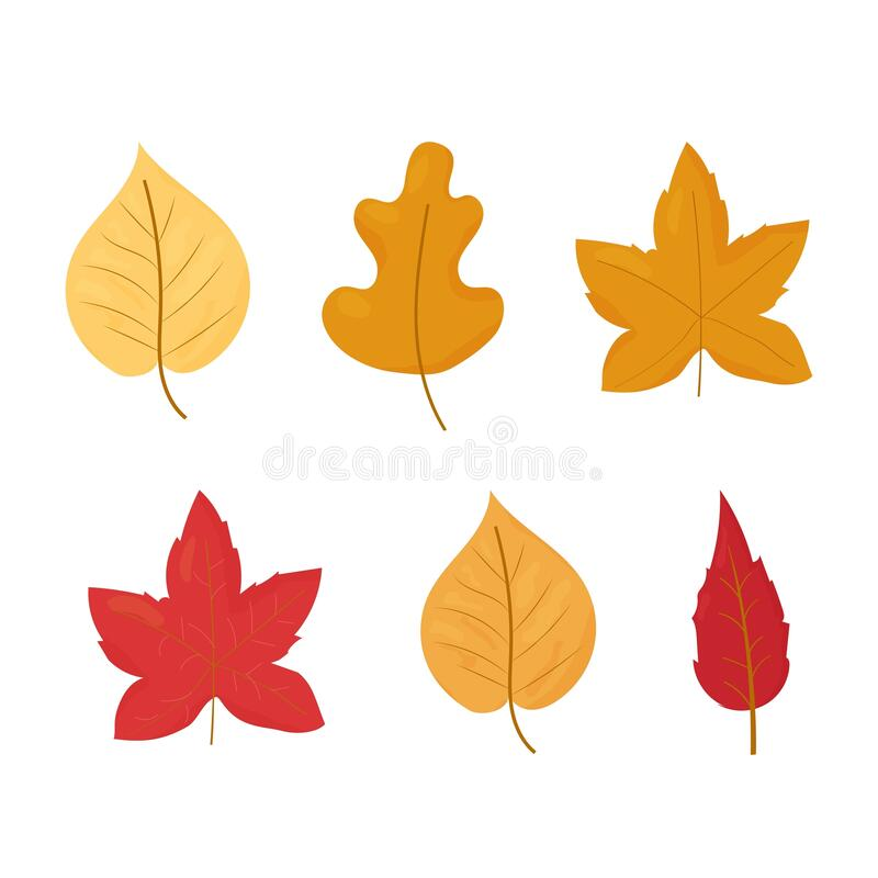 Set Of Autumn, Fall Leaves Different Colours And Shapes Isolated On White  Background Stock Vector Illustration Stock Illustration - Illustration Of  September, Shadow: 192360693