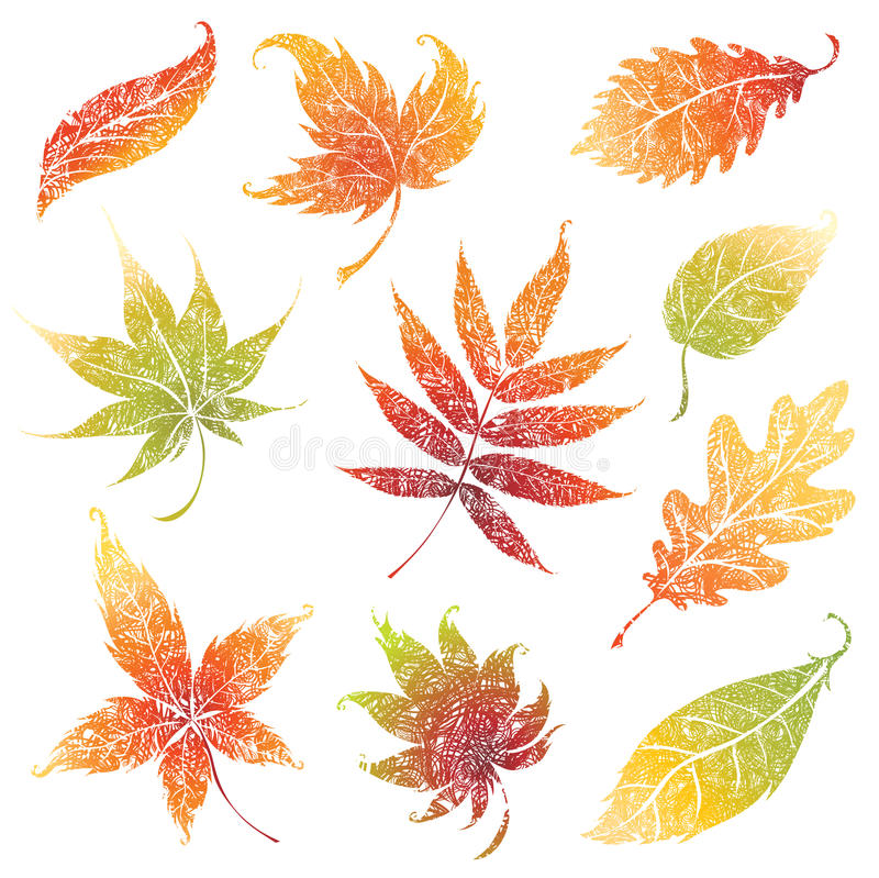 Download Set Of Autumn Grunge Leafs. Thanksgiving Stock Vector - Image: 15390658