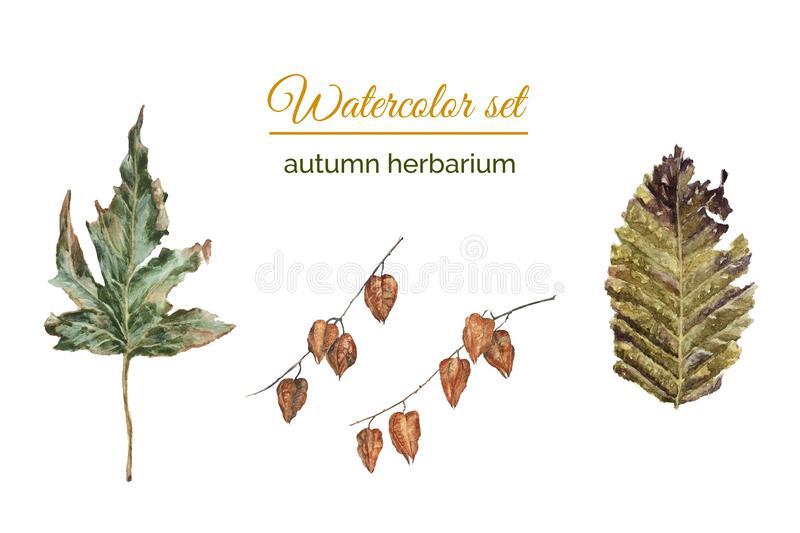 Set of autumn herbarium. Of realistic rusty leaves and twigs of seed boxes of lanterns stock illustration