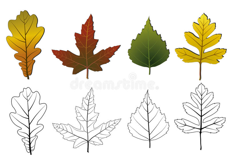 Download Set of autumn leaves. stock vector. Illustration of color - 11161997