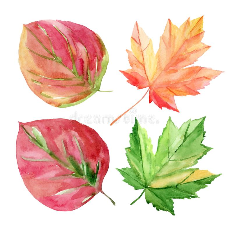 Set of autumn leaves. Red, yellow, green leaves. Watercolor illustration on a white background vector illustration