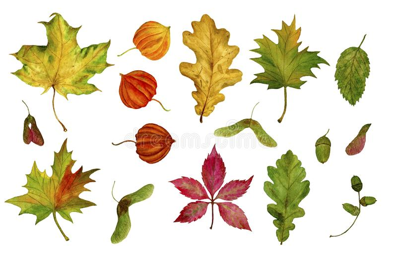 Set of autumn leaves on a white background. Design elements. Perfect for invitations, greeting cards, blogs, posters, prints stock illustration