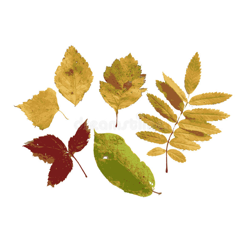 Download Set Of Autumn Leaves For Your Design Stock Photo - Image: 34356010