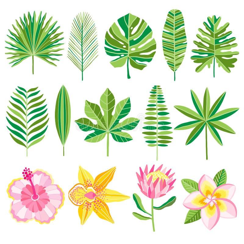 Set av gröna tropiska leaves också vektor för coreldrawillustration vektor illustrationer
