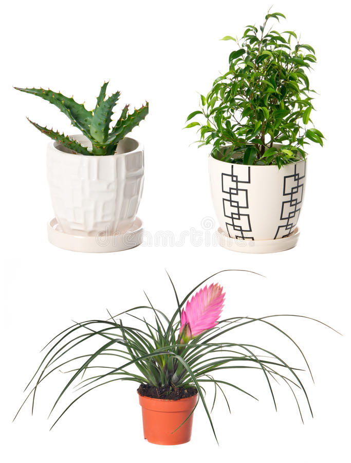 Set av inomhus växter arkivfoton