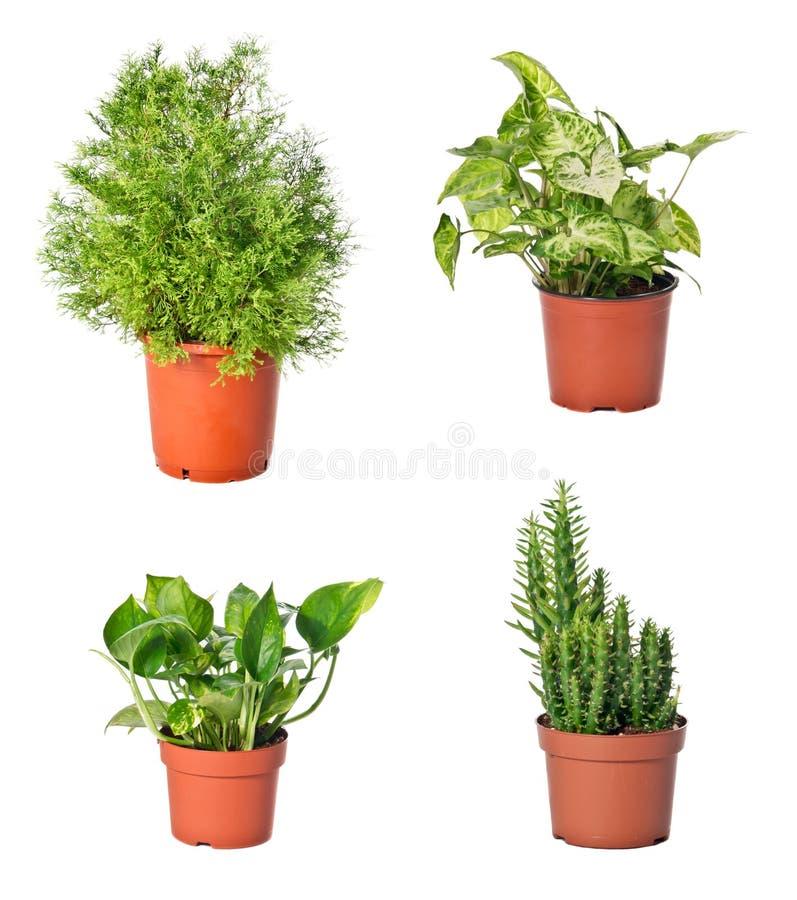 Set Av Inomhus Växter Arkivbild