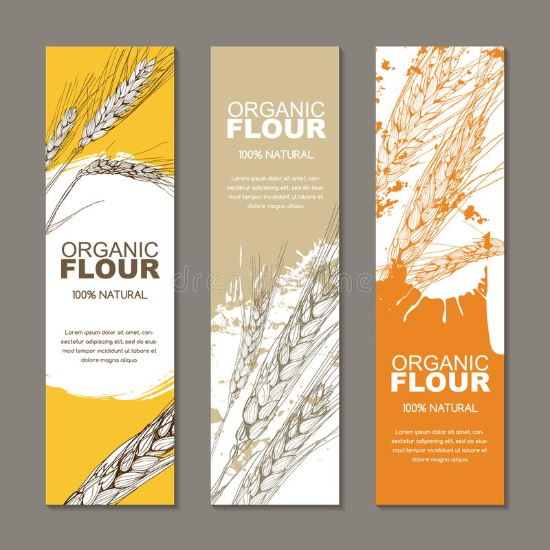 Set of backgrounds for label, package. Sketch hand drawn illustration of wheat ears. Agriculture, grain, cereal. royalty free illustration