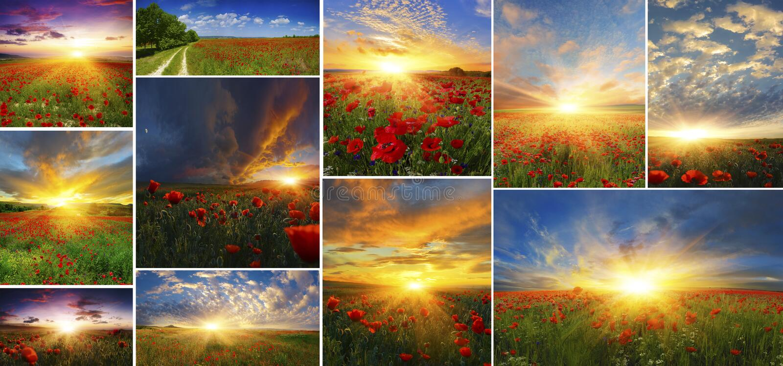Set of backgrounds of poppies with rising sun. stock images