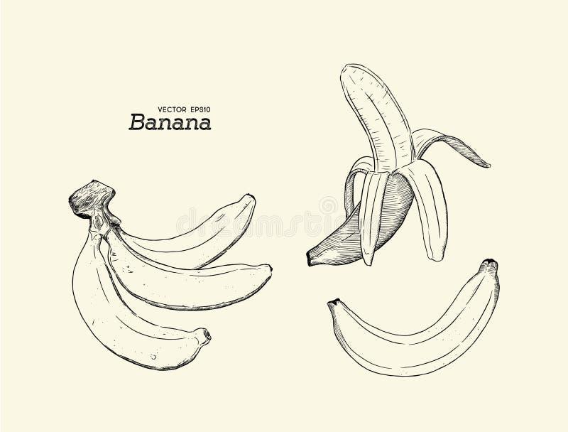 Set of banana, hand draw sketch vector. vector illustration