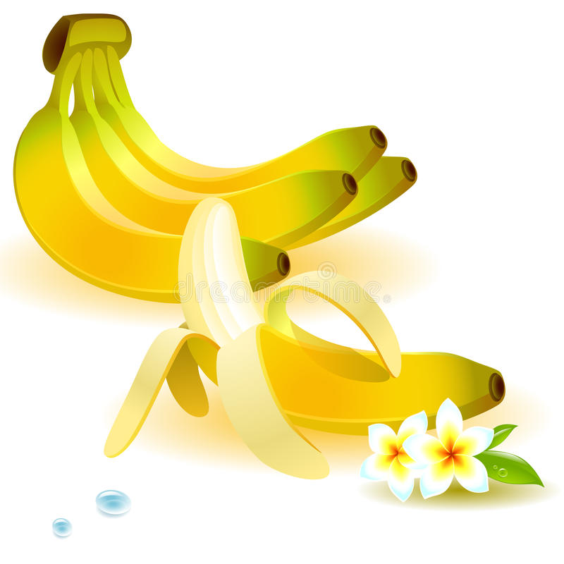 Set of bananas. On a branch and purified, with a tropical flower vector illustration