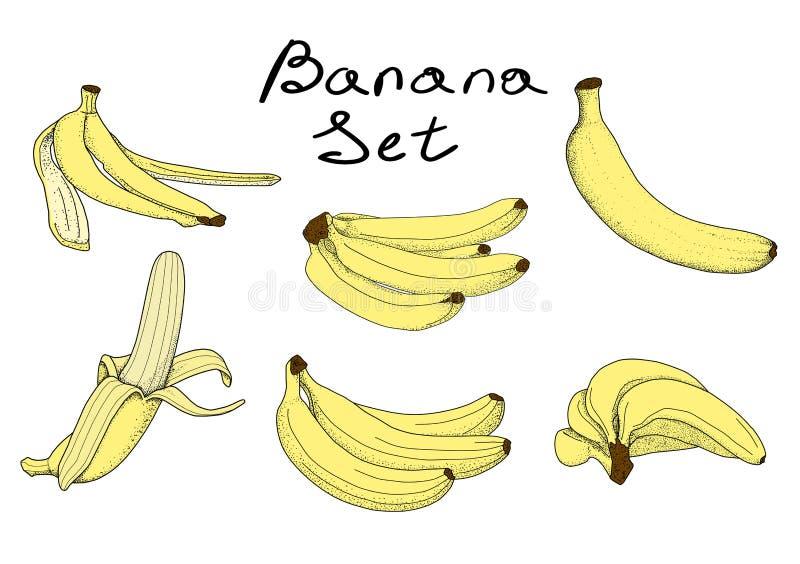 Set banany w kwiacie ilustracja wektor