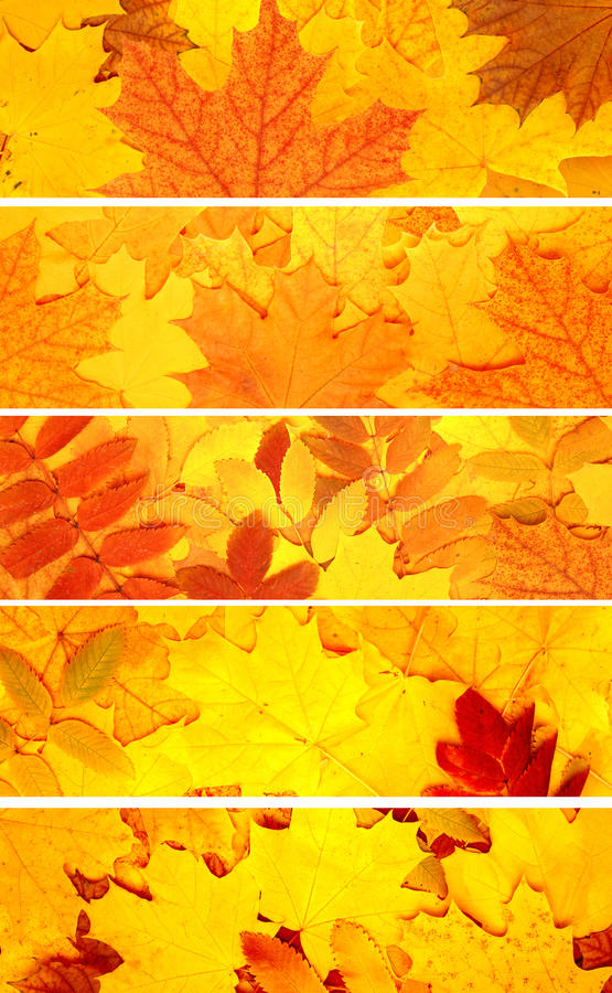 Set of banners with autumn leaves. Collection of banners with autumn leaves royalty free stock images