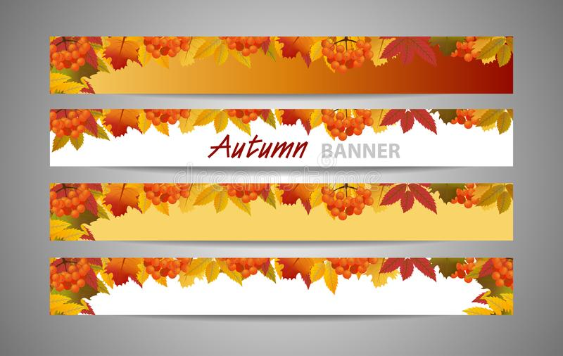 Set banners for websites autumn or fall background with branch of rowan and maple leaves. Sale or Back to School. Vector vector illustration