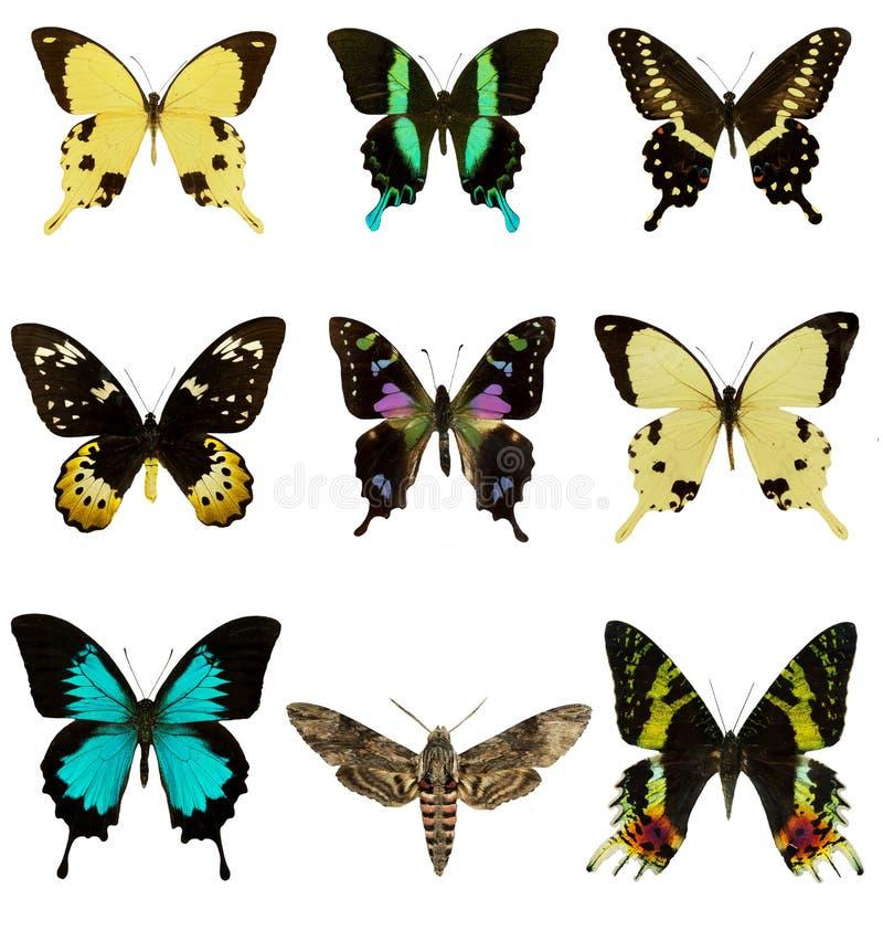 Set of beautiful butterflies stock image