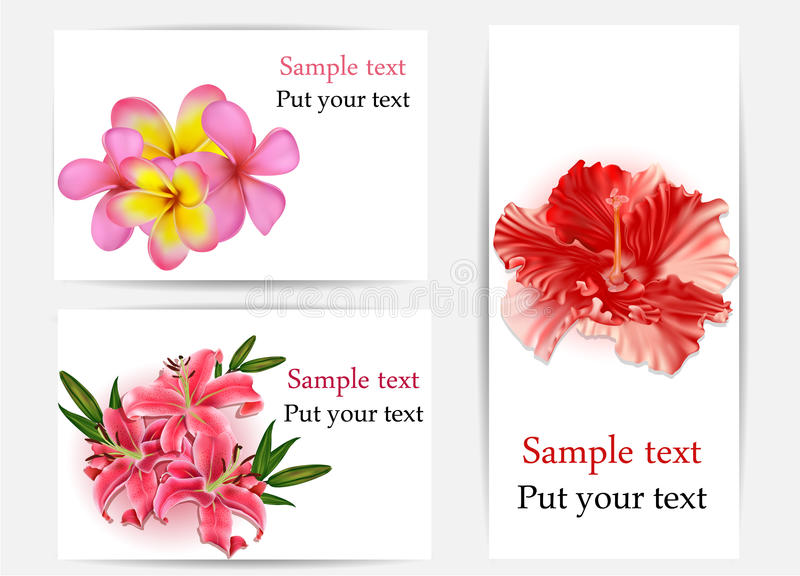 Set of beautiful gift cards with hibiscus, plumeri royalty free illustration