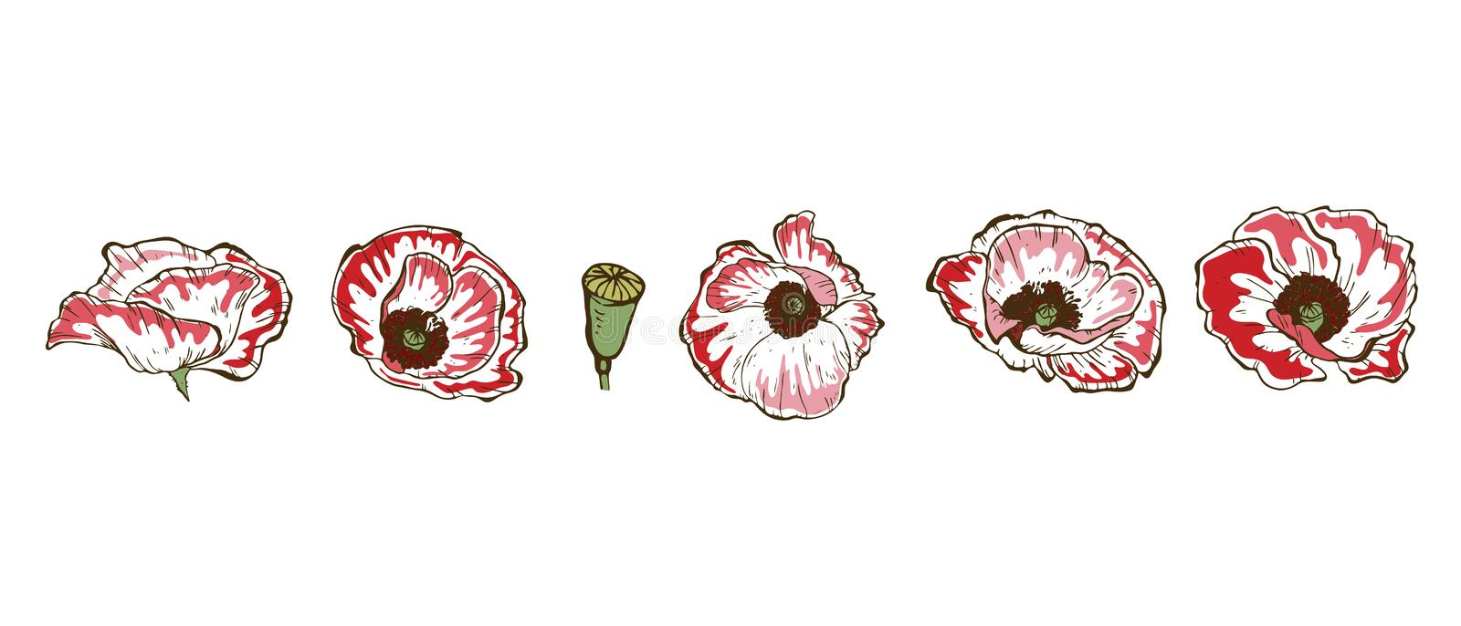 Drawing Poppy Flowers  Vector Collection Set Of Poppies Flower By