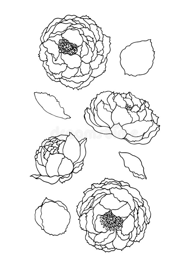 Set of beautiful rose flower vector hand drawn illustration vector illustration