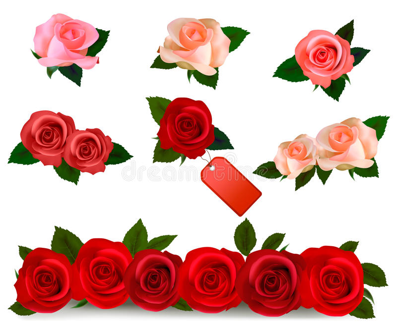 Set with a beautiful roses. realistic vector. Set with a beautiful roses. Photo-realistic vector royalty free illustration