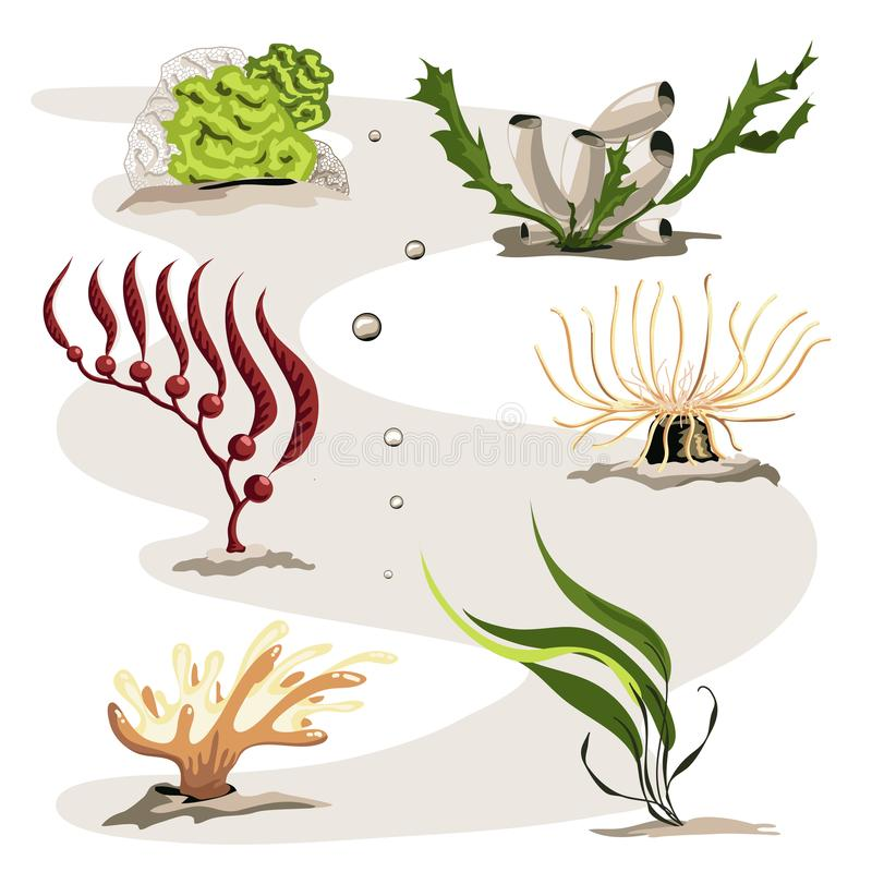 Set of different sea plants. A set of beautiful underwater plants. The set includes six different illustrations in the same style vector illustration