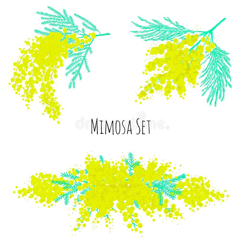 Set of beautiful yellow mimosa flowers or inflorescences and leaves isolated on white background. Elegant floral decorations. Vect royalty free illustration