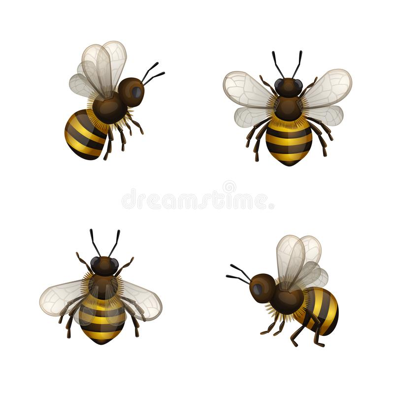 Set of bees isolated. Set of bees isolated on white royalty free illustration