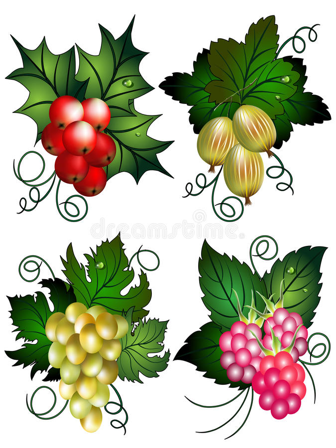 Download Set of berries stock vector. Image of fruit, collection - 10058662
