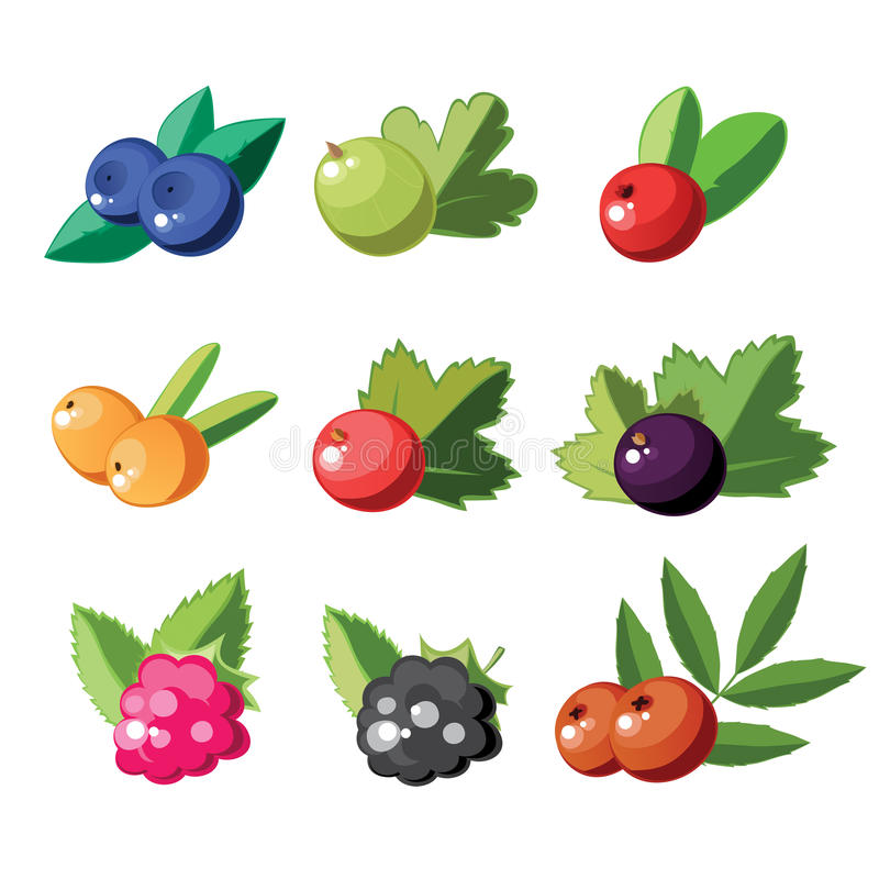 Download Set of berries stock vector. Image of color, health, ripe - 21400916