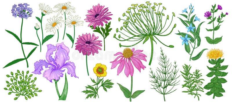 Set bielu ogród kwitnie i ziele odizolowywający na białym tle wektor Rocznik ilustracji