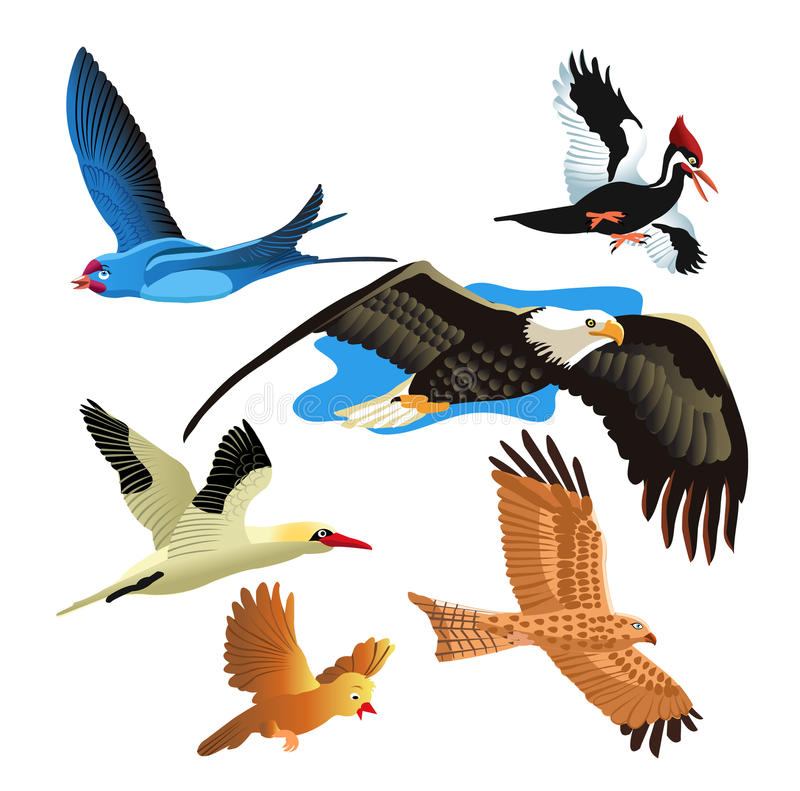 Download Set of birds stock vector. Image of kite, feather, prey - 11539021