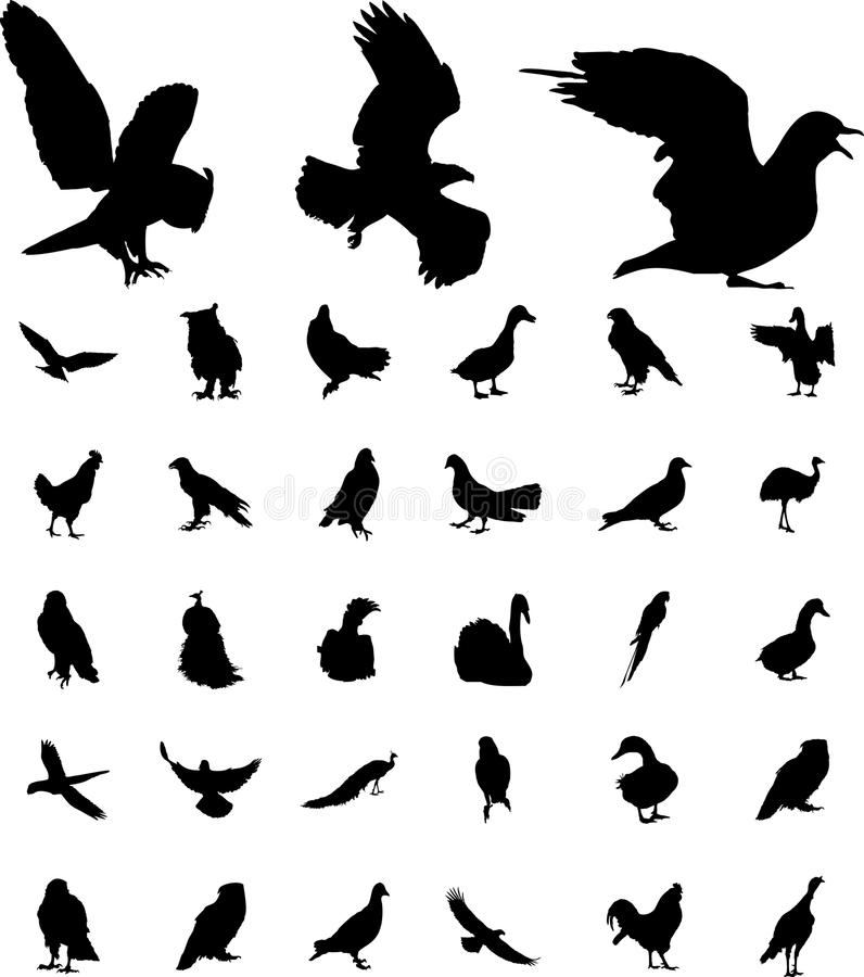 Free Set Birds Royalty Free Stock Photography - 14592487