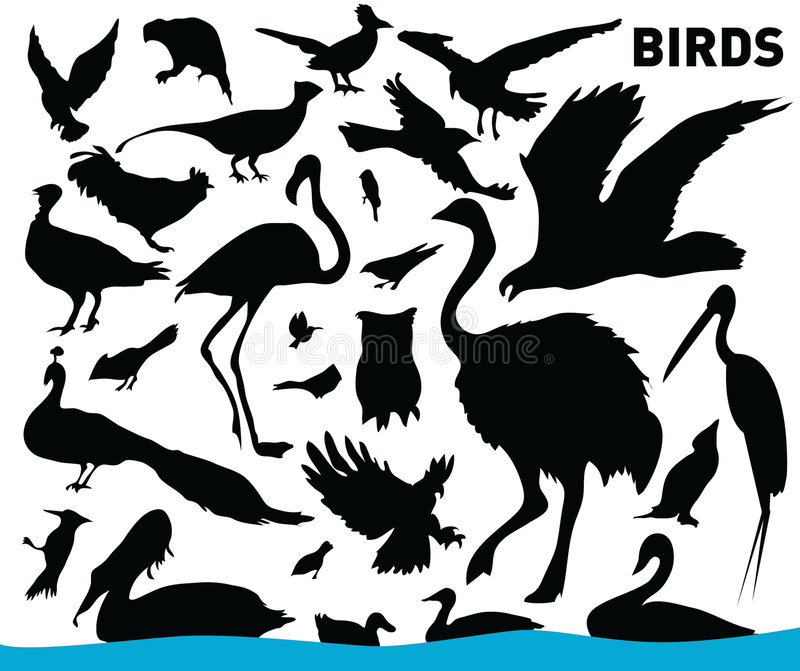 Set of birds. Vector illustration of various birds stock illustration