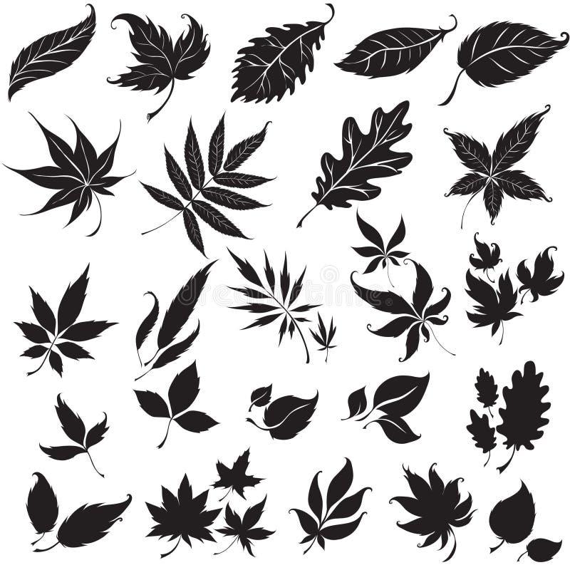 Set of black floral design elements vector illustration