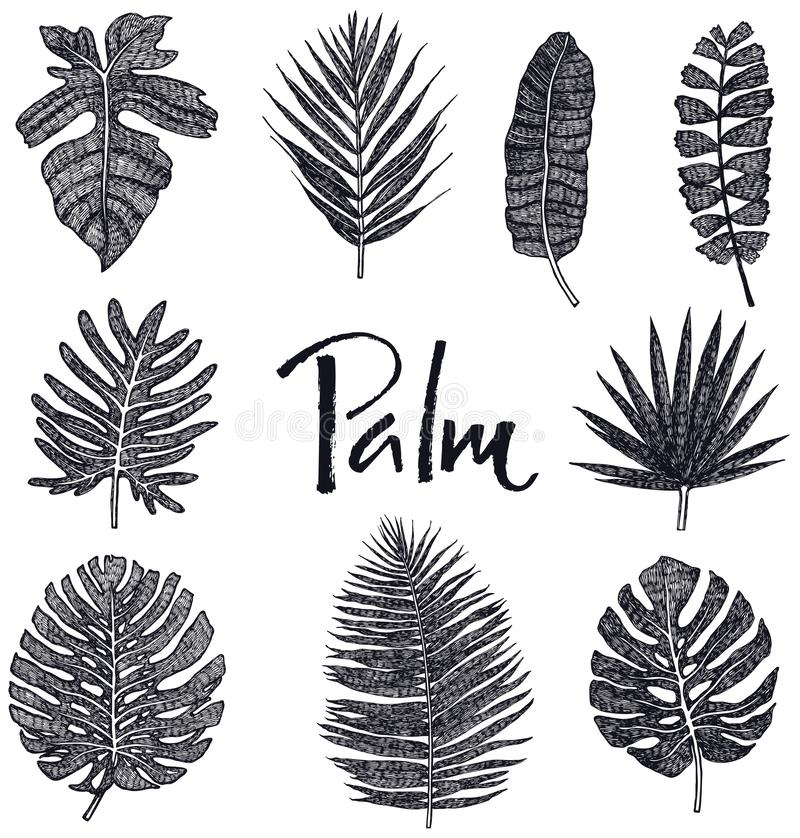 Set of Black Palm leaves Hand drawing Isolated object Sketch style vector illustration