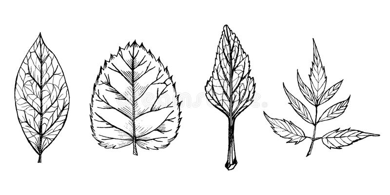 Hand drawn black and white leaves royalty free illustration